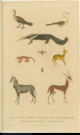 [Birds, ants, anteater, and antelopes]