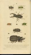 [Beetles]