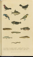 [Birds, a worm, and fishes]