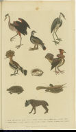 [Birds, shell, hedgehog, hyena, and fish]