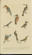 [Kingfishers]