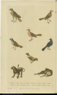 [Birds, lion, and leopard]