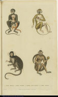 [Various monkeys]
