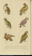 [Various parrots]