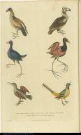 [Various birds]
