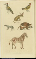 [Woodpeckers, zebra, wolverine, weasel, and zerda]