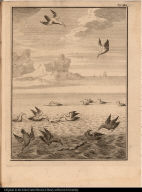 [Seabirds]