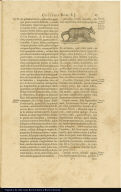 [Armadillus Ericius or Armadillus Mexicanus]
