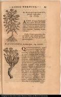 [top] [De Nanahuaquahuitl, seu morbi Gallici arbore.] [bottom] [De Quauhtlepatli, seu Arbore Ignea.]