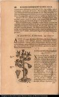 [De Xiloxochitl. Flore Capillaceo.]