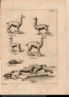 [Animals of Chile]