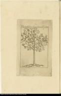 [Cinchona tree]