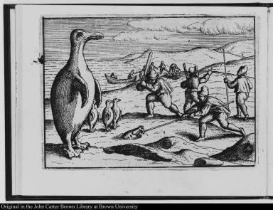 [Men killing penguins]