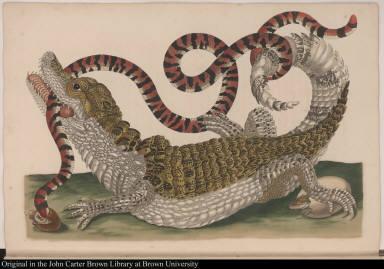 [Alligator with snake]