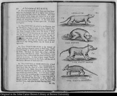 Opossum; The Potto; The Coati Mondi; The Tatus