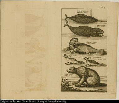 [Narwhal, whale, sea horse or walrus, seal with a caul, seal with black sides, and a polar bear]