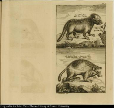 [top] Le Porc-Epy. Het Yzer-Varken [bottom] Le Quick-Hatche ou Loup-Cervier. De Quick-Hatch of Locht.