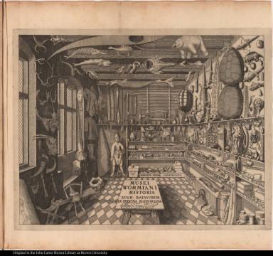 Musei Wormiani historia