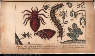 a. Apocin Corne Cabrit. b. Ap. Hérissé. c. Mancelinier. d. Azédarach, e. Quebec, f. Karapaf des Poules. g. Scorpion, h. Bête à millepieds, i. et k. Areignées crabes, l. et m. Areignées à Cul rouge, n. leurs oeufs.