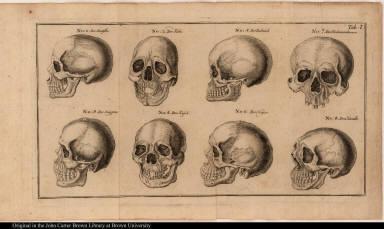 [Human skulls]