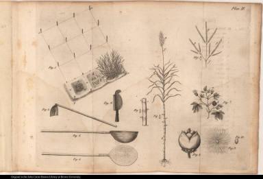 [Sugar field, sugar cane plants, sugar production tools]