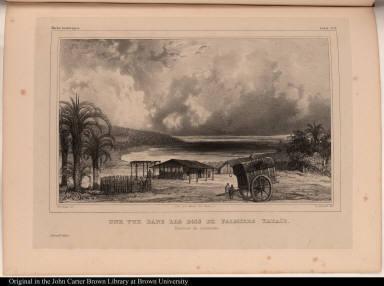 Une vue dans les bois de Palmiers yataïs. Province de Corrientes.