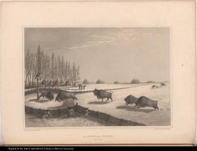 A Buffalo Pound. Feb. 8. 1820