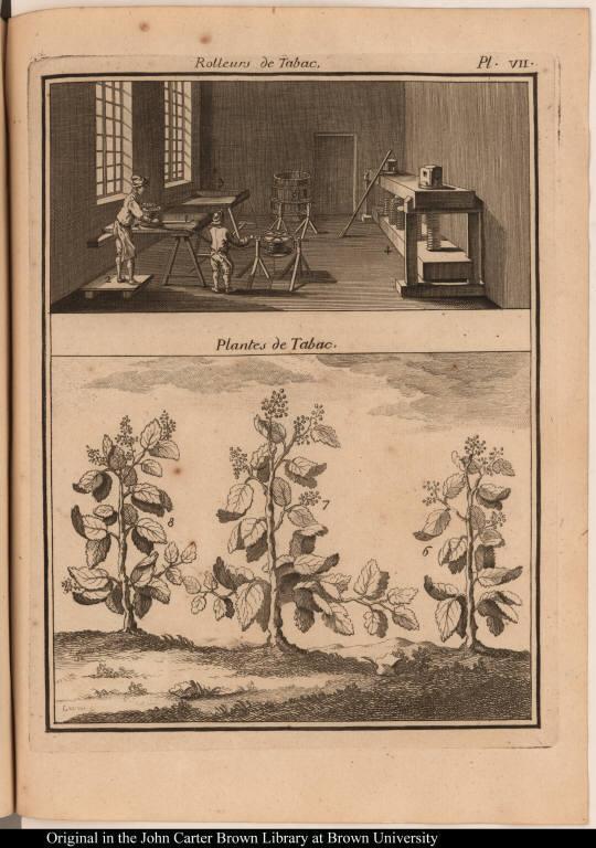[top] Rolleurs de Tabac. [bottom] Plantes de Tabac.