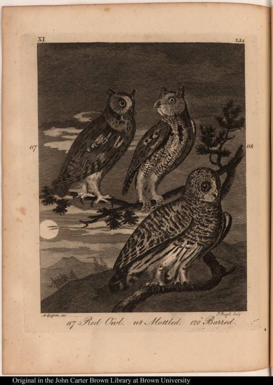117 Red Owl. 118 Mottled. 120 Barred.