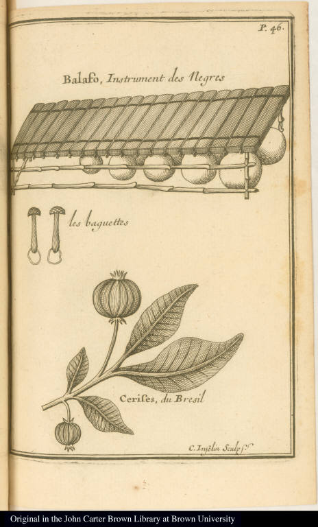 [Musical instrument and fruit]