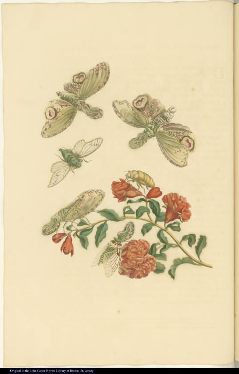 [Pomegranate tree and insects]