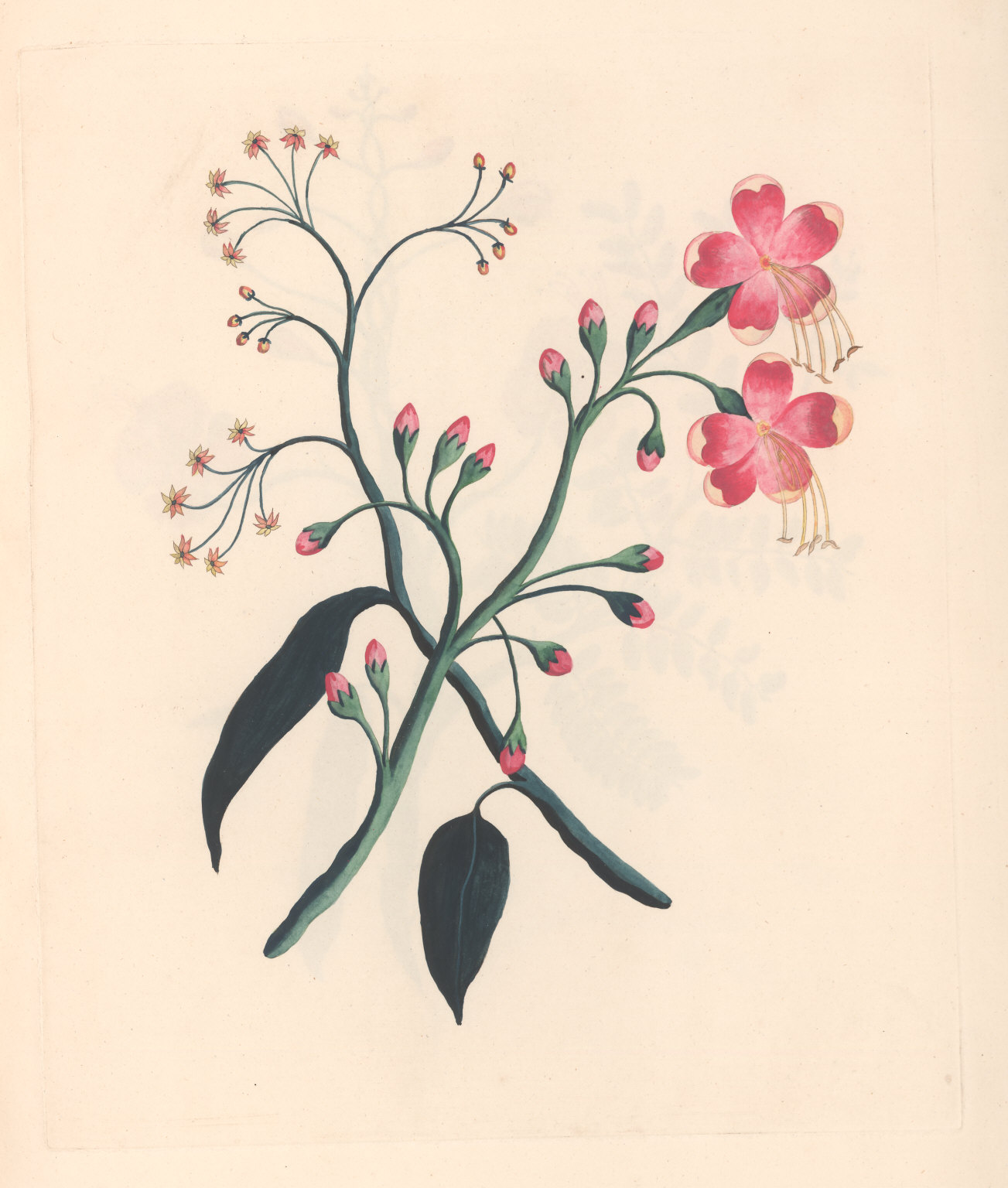 No. I. The Bombay Gossipium; or, silk cotton tree. ... The smaller Flower drawn with the above. The Apocynum-erectum; or Wild ipecacuan. A strong vegetable Poison and Medicine.