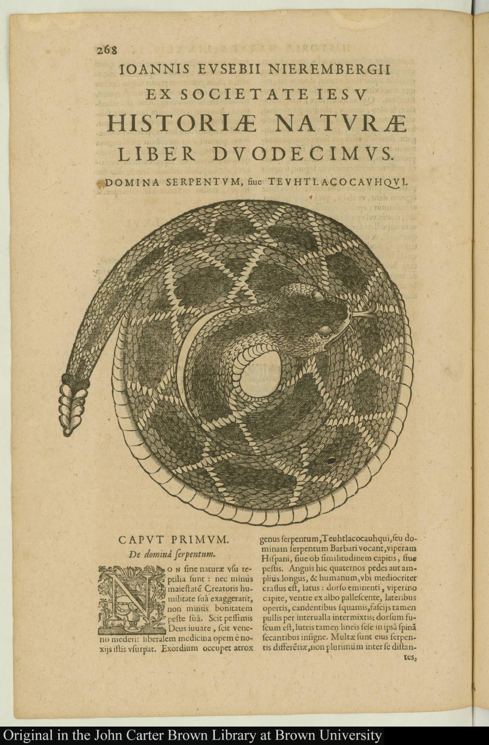 Domina serpentum, sive teuhtlacocauhqui.