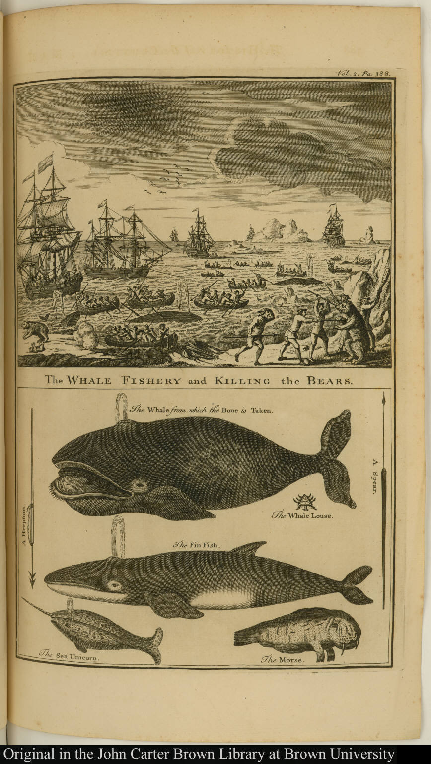 The Whale Fishery and Killing the Bears