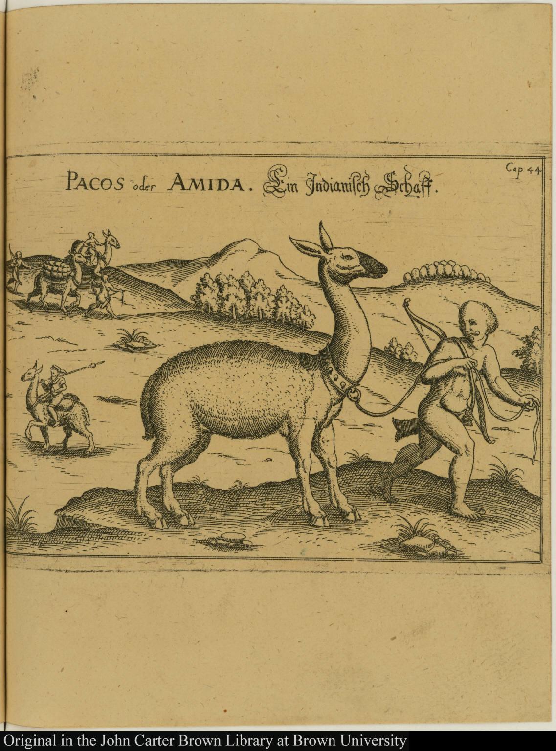 Pacos oder Amida. Ein Indianisch Schaff.