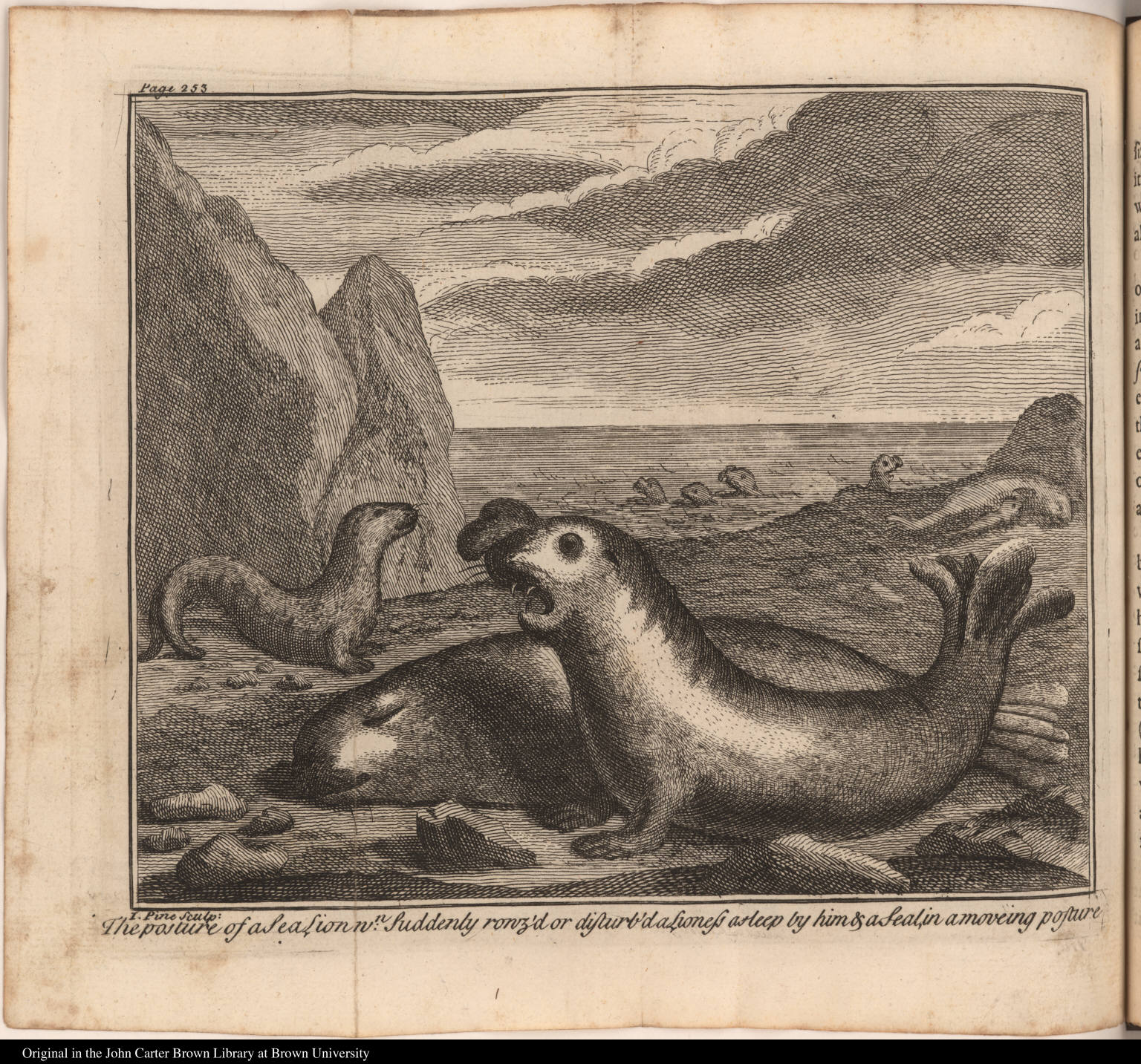 The posture of a Sea Lion wn. Suddenly rouz'd or disturb'd a Lioness asleep by him & a Seal, in a moveing posture