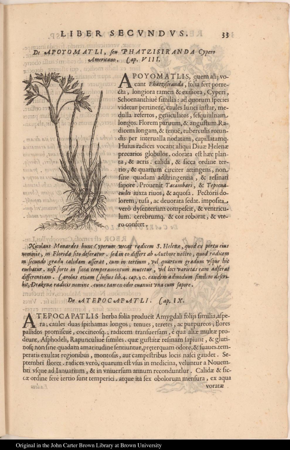 De Apoyomatli, seu Phatzisiranda Cypero Americano.