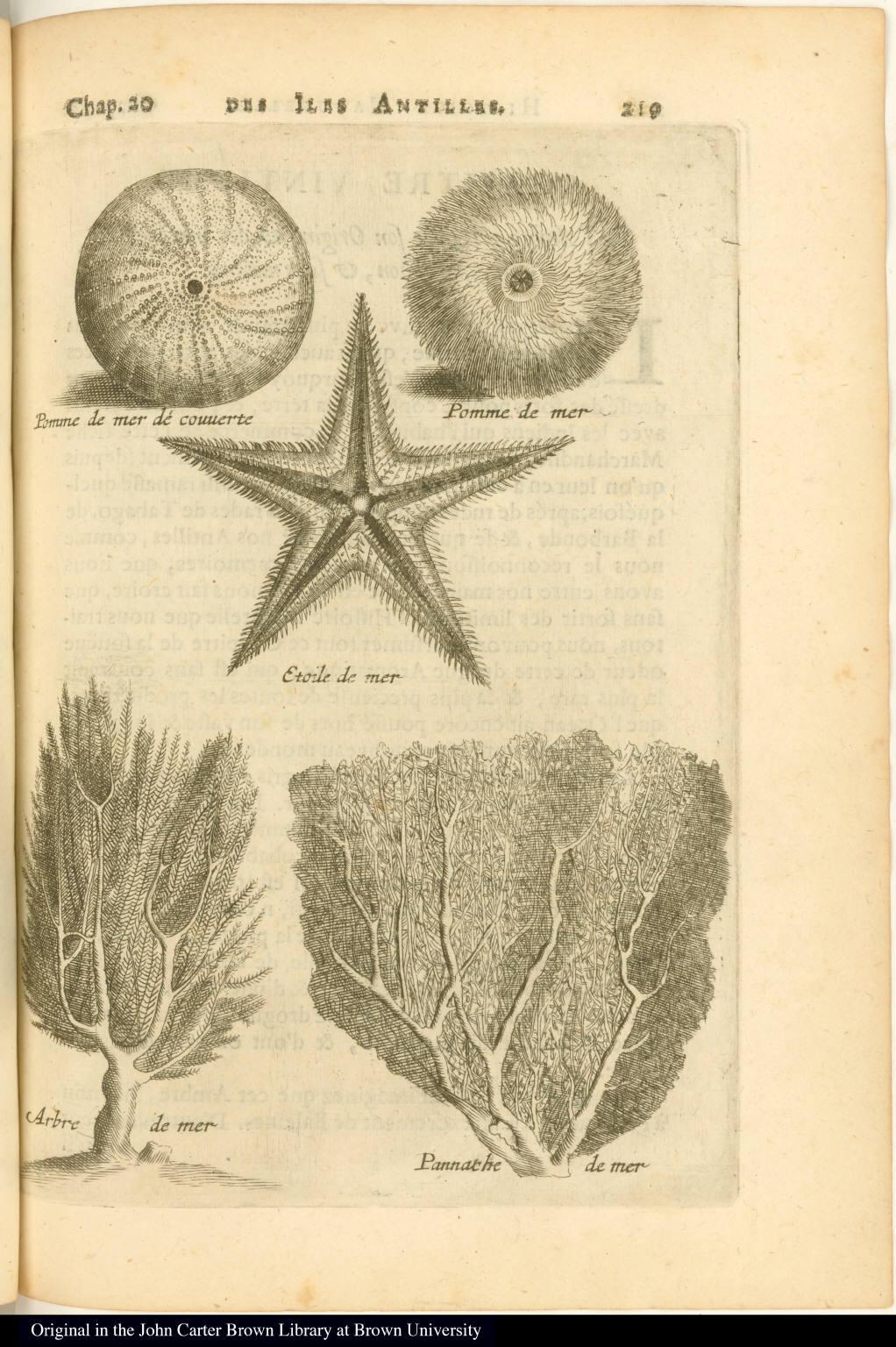 [Sea urchin, starfish, algae (?), and coral]