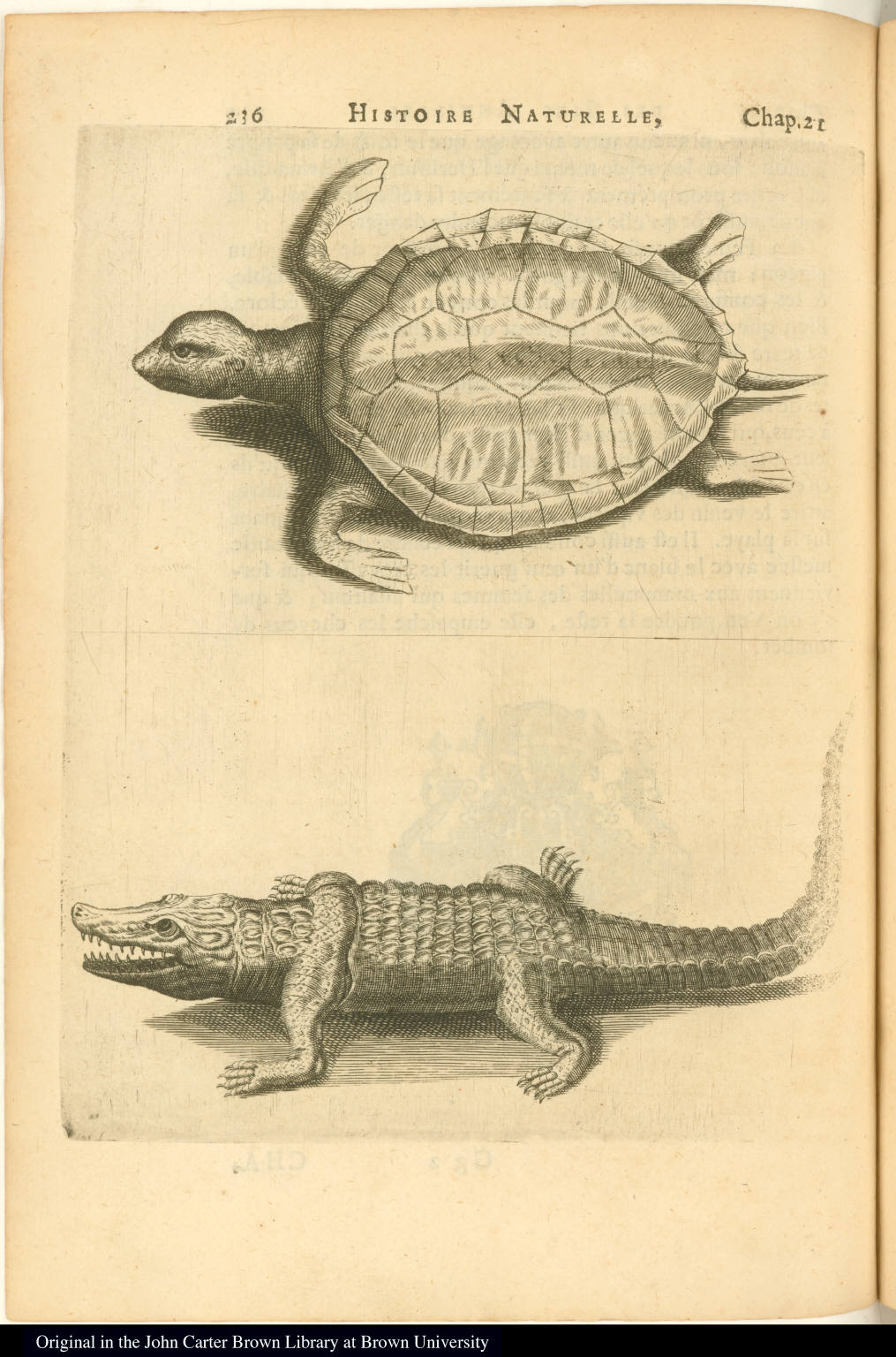 [Tortoise or turtle and caiman]