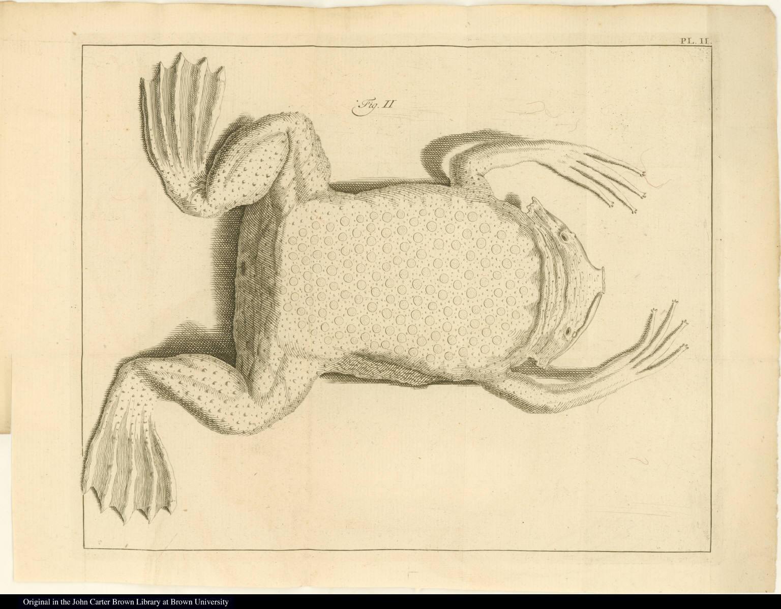 [Surinam toad]