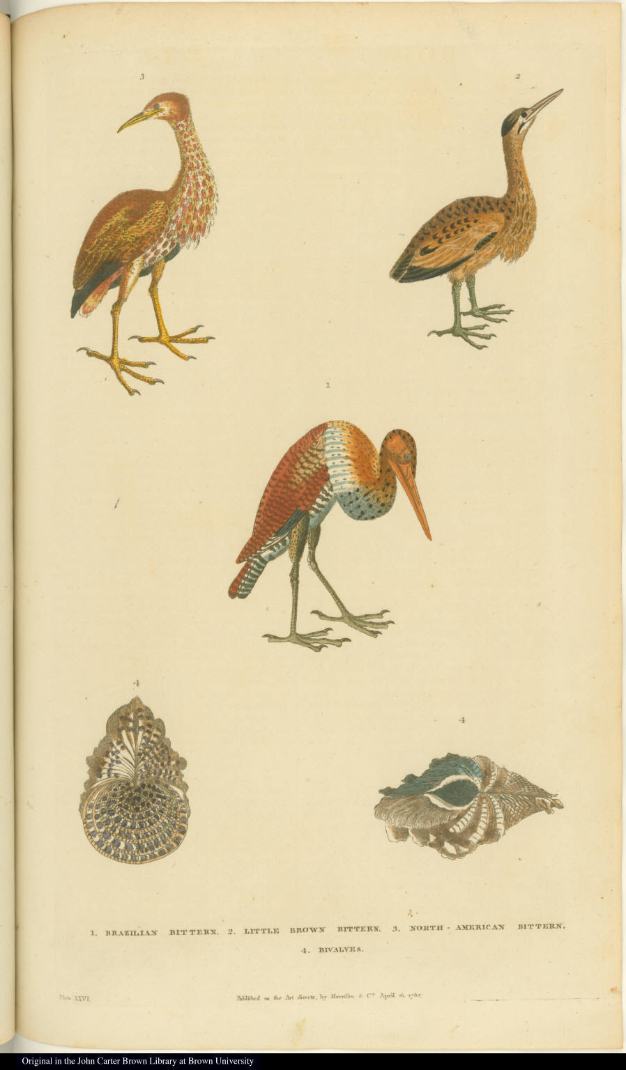 [Birds and bivalves]