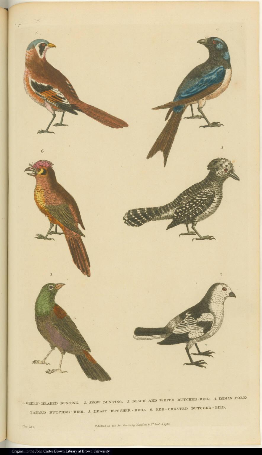 [Birds]