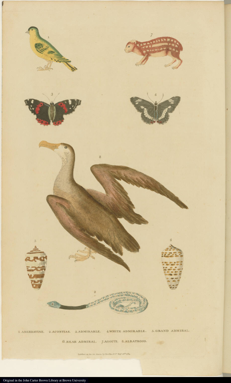 [Birds, snake, butterflies, and agouti]
