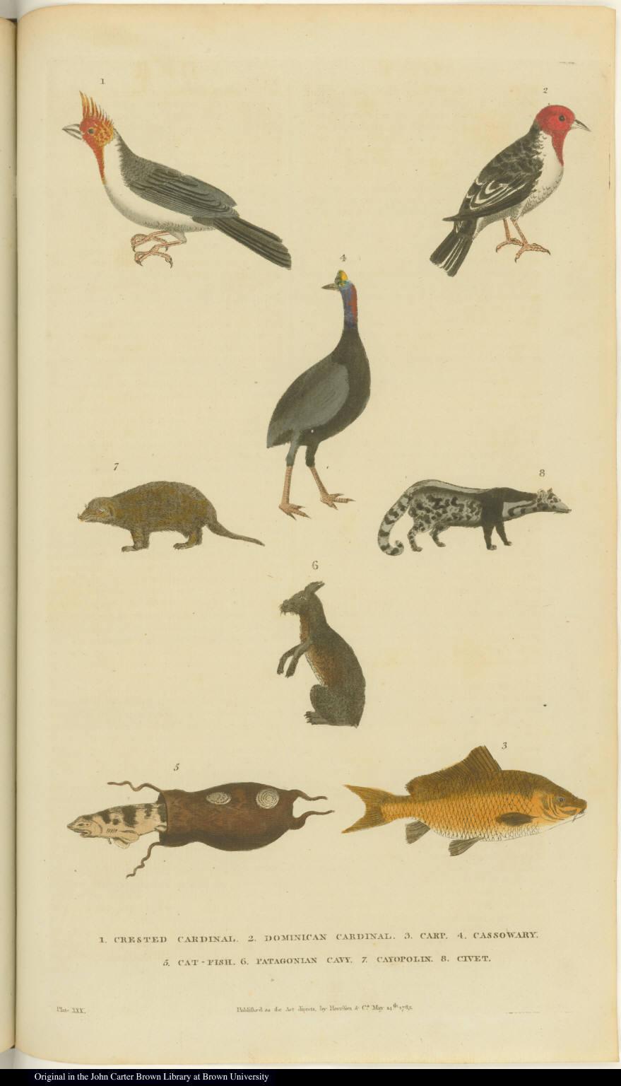 [Birds, animals, and fish]