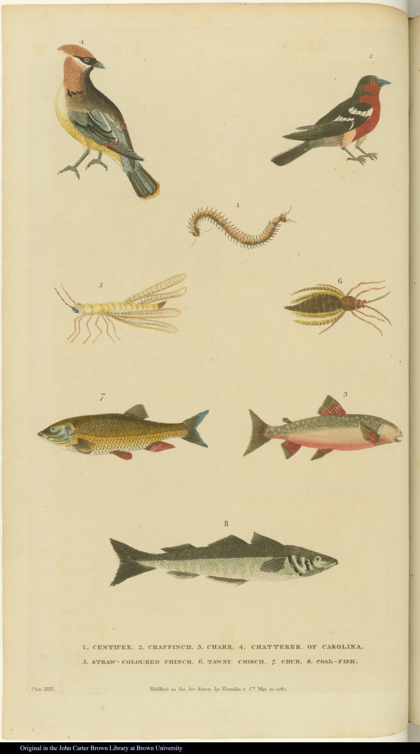 [Birds, insects, and fish]