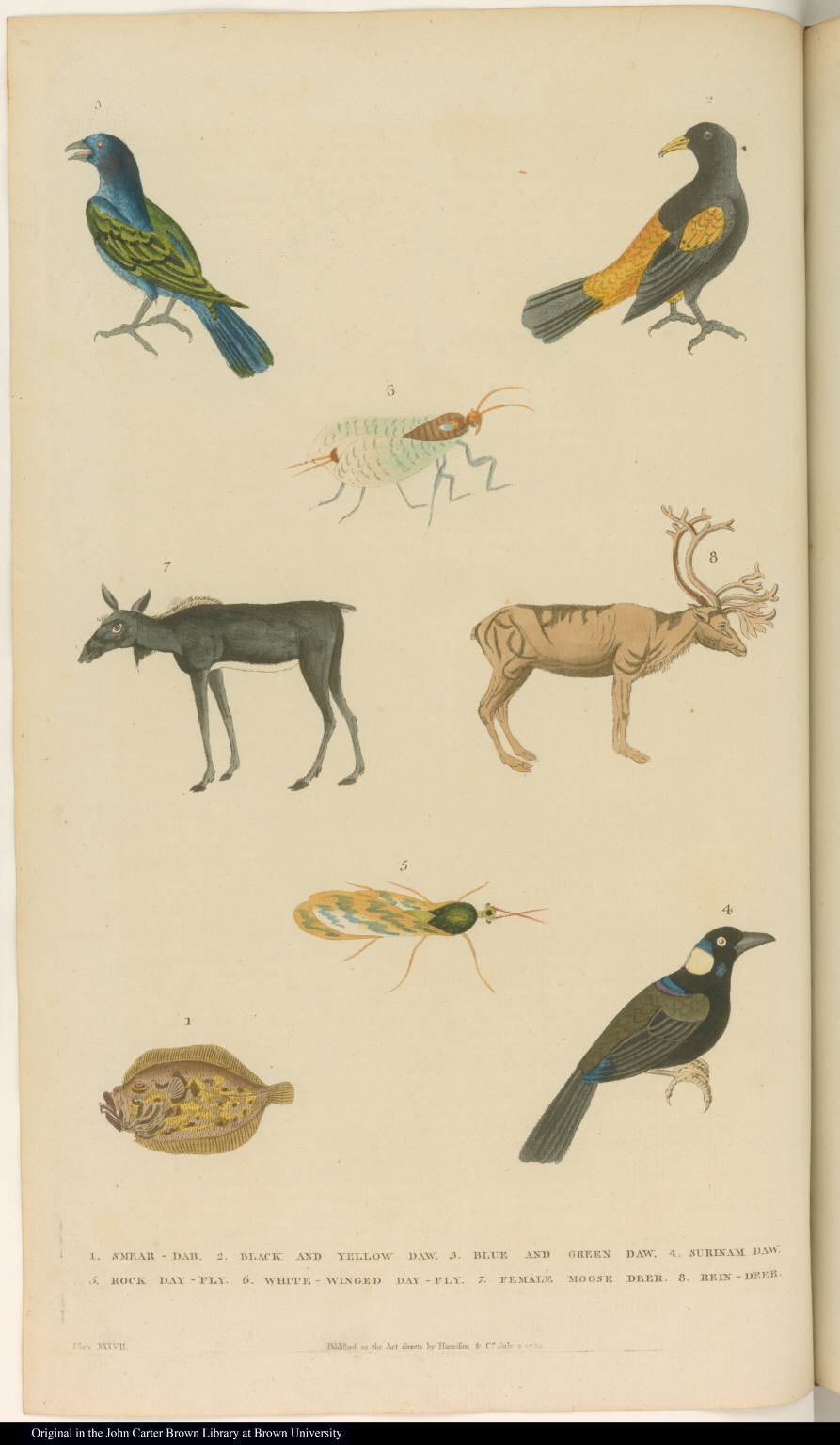 [Birds, insects, deer, and a fish]