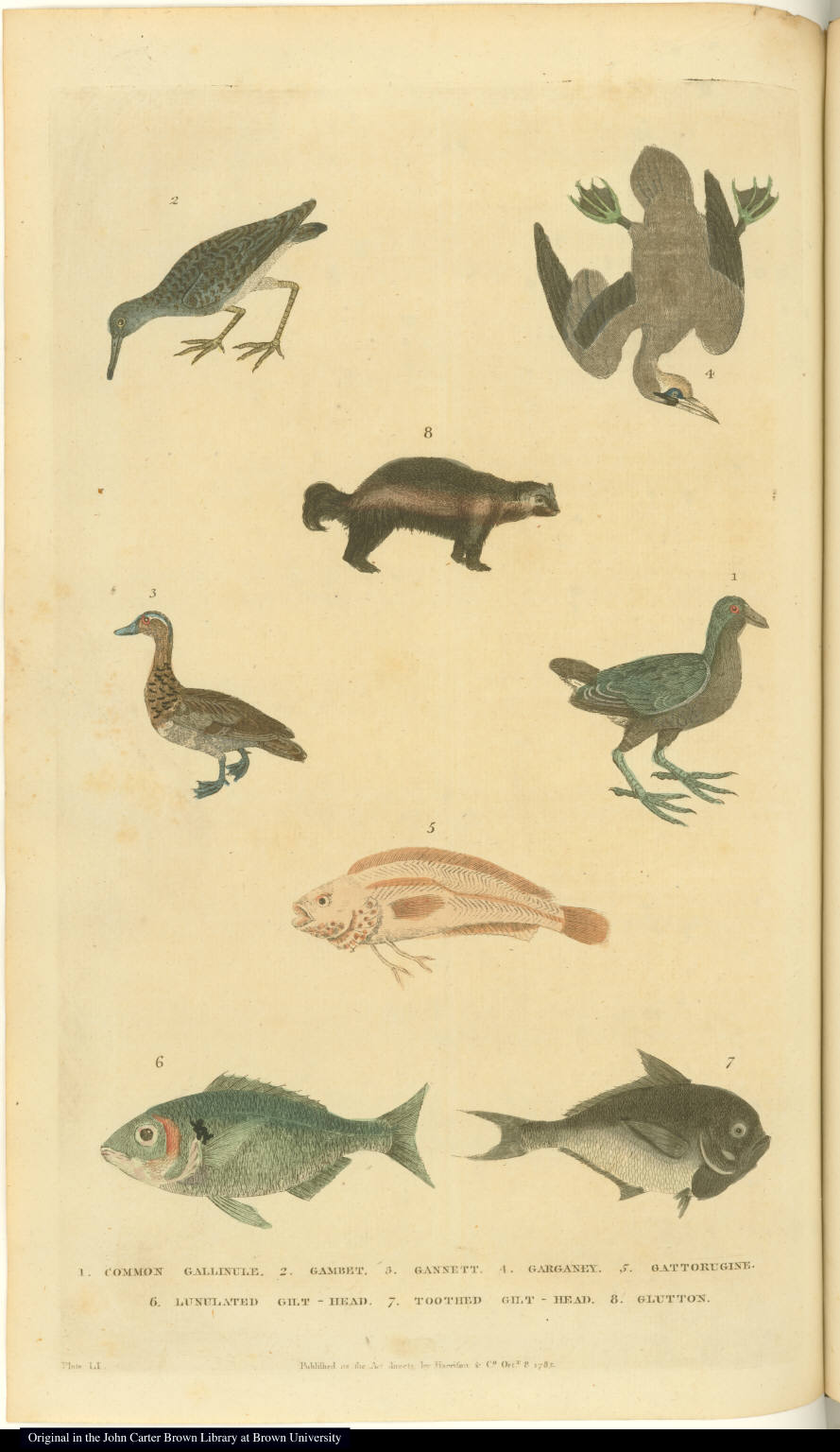 [Fish, birds, and wolverine]