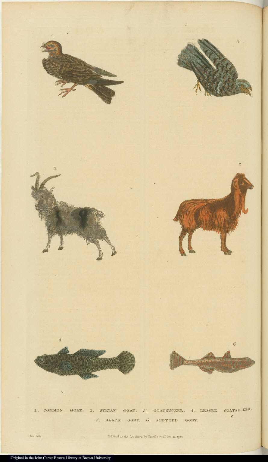 [Fish, birds, and goats]