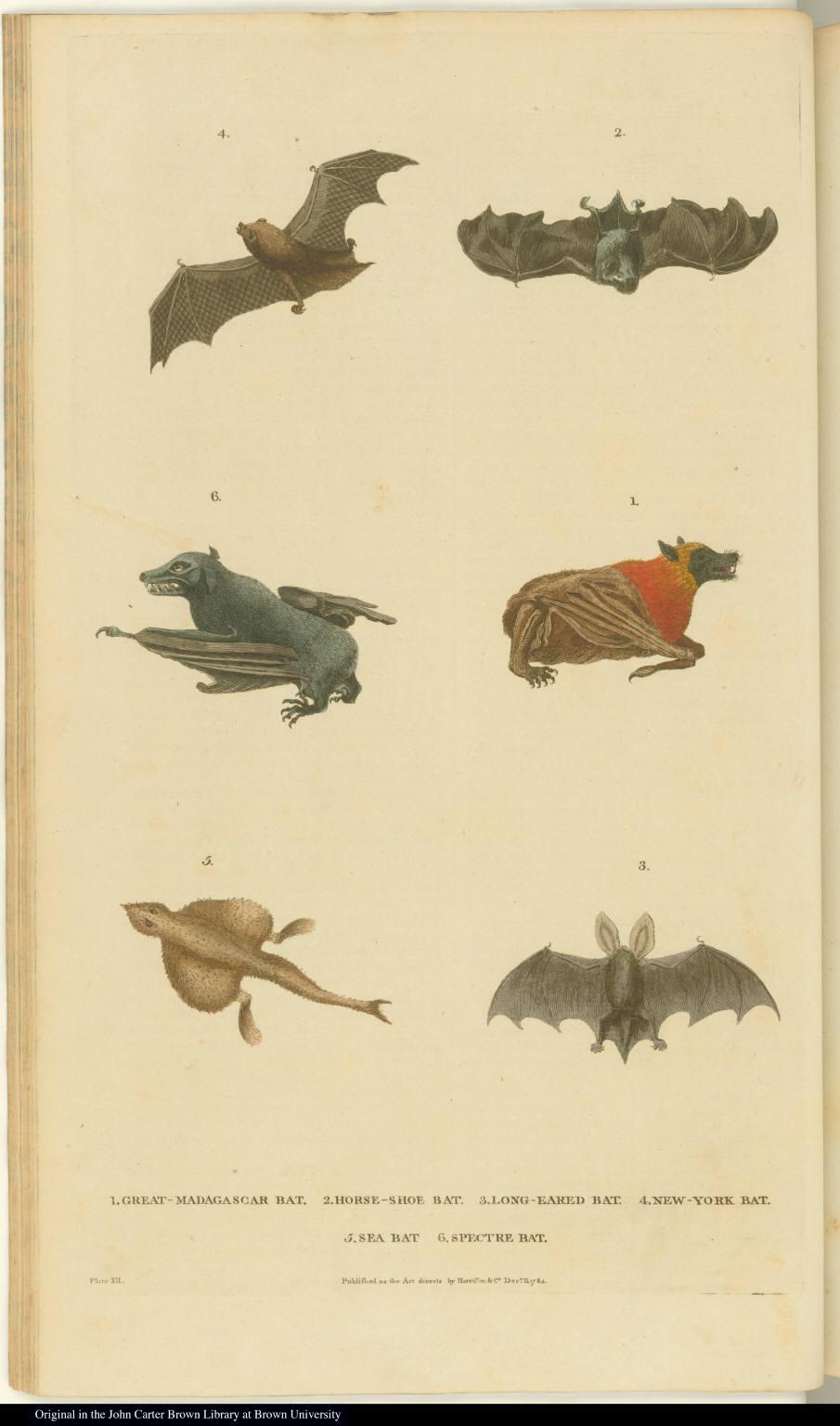 [Bats and a fish]