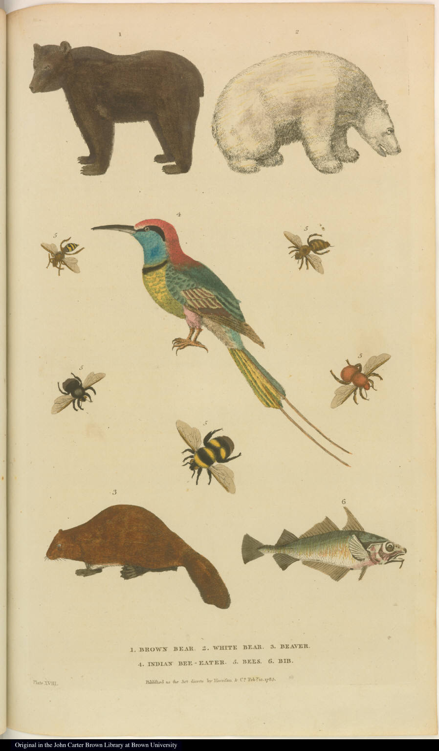 [Bears, beaver, bird, bees, and fish]